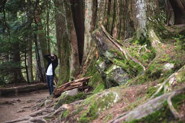 taking-forest-pictures